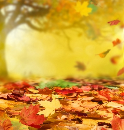 Fall in Love with Fall Again